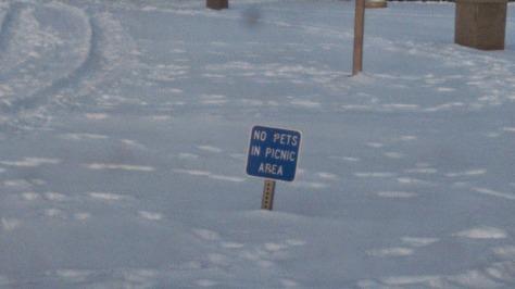 No pets snow