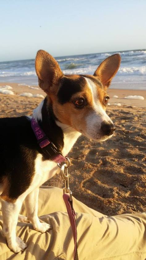 Libby at the beach