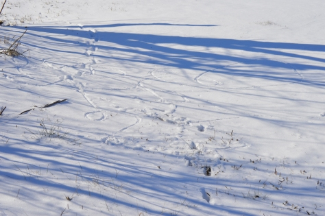 I didn't take use a stick to draw squirrly cues in the snow.