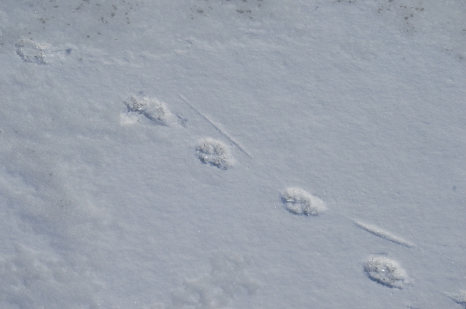 Tracks in the snow…